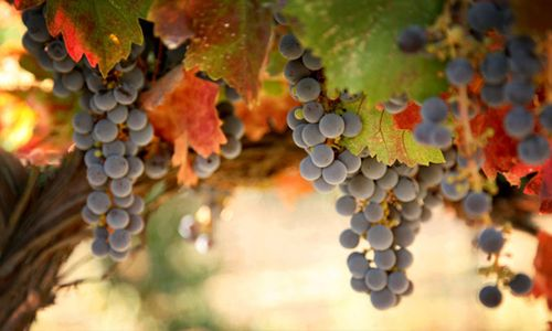 St Louis Media, LLC has launched MissouriWine.Directory