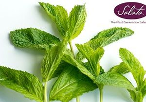 Salata Brings Enjoy-Mint To June