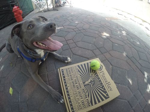 PizzaRev Launches #PizzaRevPets Campaign to Promote Pet Adoption in June