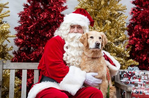 Mutts Canine Cantina Hosts 'Pictures with Santa Paws'